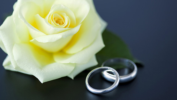 Two wedding rings sat next to a cream rose