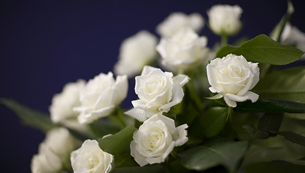 Death registration leicestershire county council death registration white roses mightylinksfo