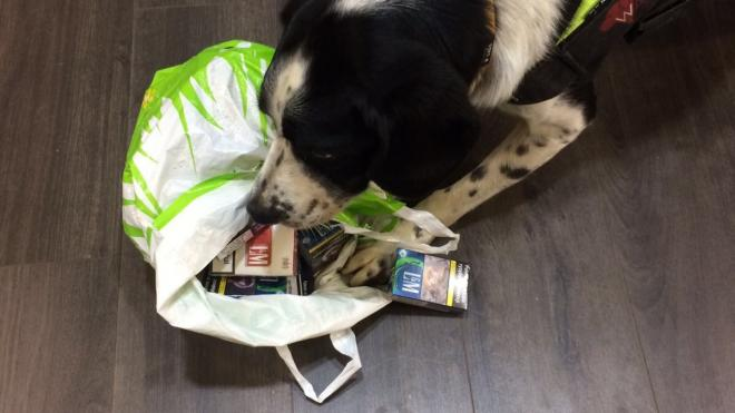A sniffer dog searching a bag