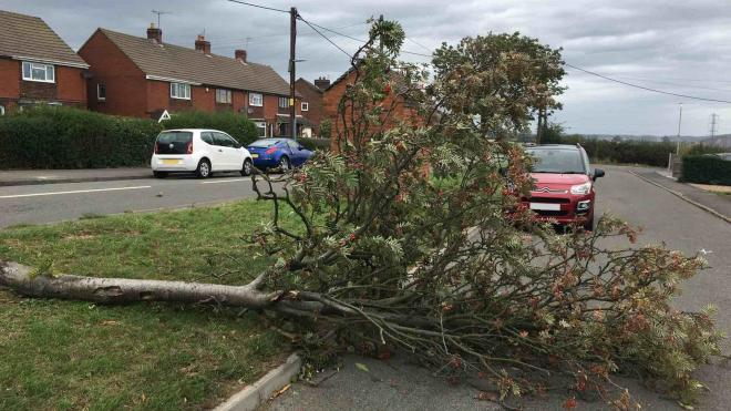Strong winds caused trees and branches to fall across the county