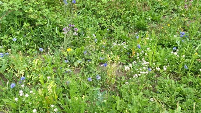 Close up photo of wildflower verge with grass and flowers