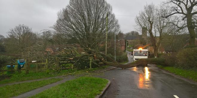 Fallen tree in road